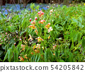 Small red spring garden flowers, side view 54205842