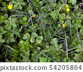 Texture of green grass and yellow flowers 54205864