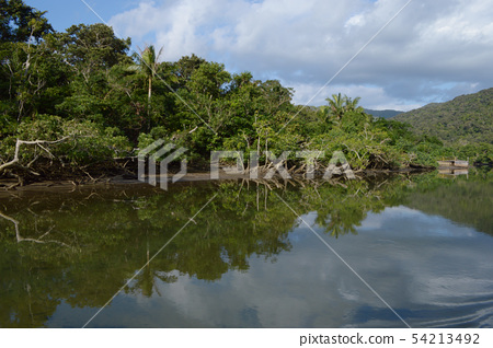 Mangrove forest reflecting on the water surface of southern Okinawa 54213492