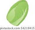Chinese cabbage 54219415