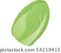 中國的白菜 54219415