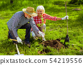 Husband and wife living in cottage house in summer planting trees 54219556