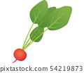 紅蘿蔔 54219873