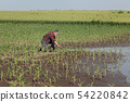 Agricultural scene, farmer in corn field after 54220842