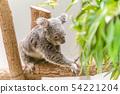코알라 동물원 가고시마 관광 외출 54221204