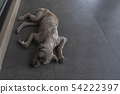 A dirty lonely vagrant dog lie down on the floor 54222397