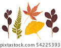 Set of asian dry pressed leaves of various shapes 54225393