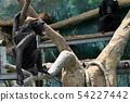 침팬지 54227442