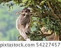 나무 위의 원숭이 54227457