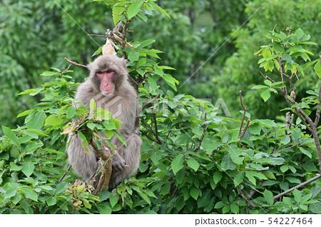 나무 위의 원숭이 54227464