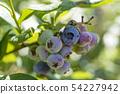 【藍莓鄉村廣場】 54227942