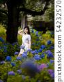 有長的黑髮的少婦有八仙花屬背景在Kamogawa公園,Nishinomiya市,兵庫縣 54232570
