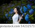 有長的黑髮的少婦有八仙花屬背景在Kamogawa公園,Nishinomiya市,兵庫縣 54232573