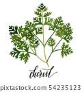 popular culinary herbs  54235123