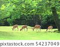 deer 54237049