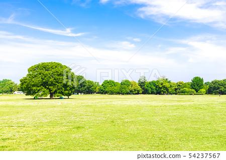 新鮮的綠色和藍天傳播的風景 54237567