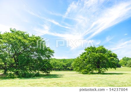 新鮮的綠色和藍天傳播的風景 54237804