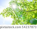 新鮮的綠色和太陽葉 54237873