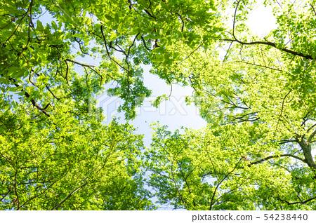 新鮮的綠色和太陽葉 54238440