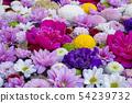 교토 육각 당 꽃 54239732