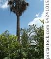 日曆的芽,據說是antichoke的原型 54241015