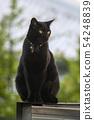 Black cat 54248839