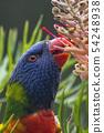 Colorful bird 54248938
