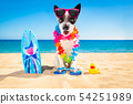 surfer dog beach 54251989
