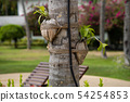 flower beds with flowers on the palm. 54254853