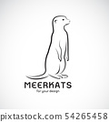 Vector of meerkats design on white background.  54265458