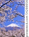 Mount Fuji and cherry blossoms 54266656
