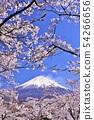 富士山和櫻花 54266656
