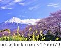 富士山和櫻花 54266679