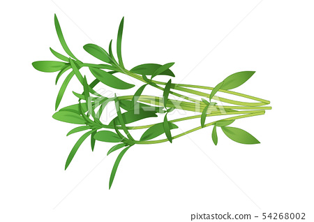 fresh herbs isolated on white background. Spring greens hand draw illustration 014 54268002