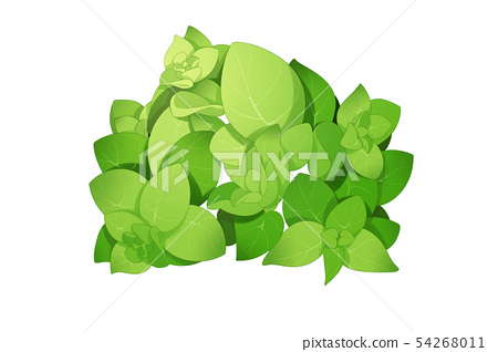fresh herbs isolated on white background. Spring greens hand draw illustration 017 54268011