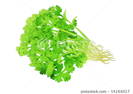 fresh herbs isolated on white background. Spring greens hand draw illustration 001 54268027