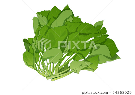 fresh herbs isolated on white background. Spring greens hand draw illustration 023 54268029