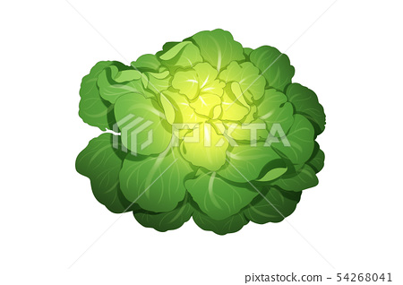 fresh herbs isolated on white background. Spring greens hand draw illustration 013 54268041
