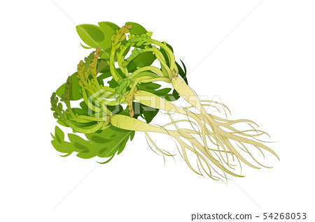 fresh herbs isolated on white background. Spring greens hand draw illustration 002 54268053