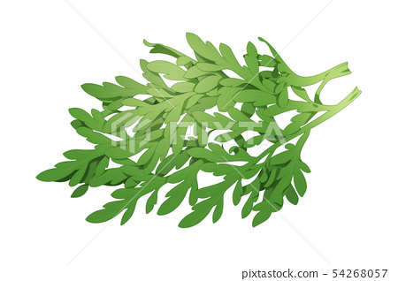 fresh herbs isolated on white background. Spring greens hand draw illustration 019 54268057