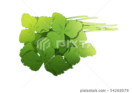 fresh herbs isolated on white background. Spring greens hand draw illustration 022 54268079