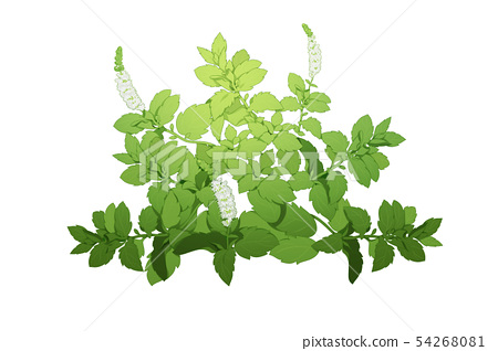 fresh herbs isolated on white background. Spring greens hand draw illustration 011 54268081