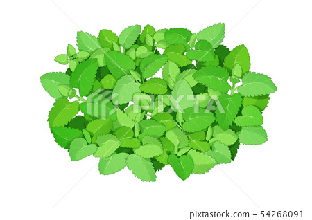 fresh herbs isolated on white background. Spring greens hand draw illustration 010 54268091