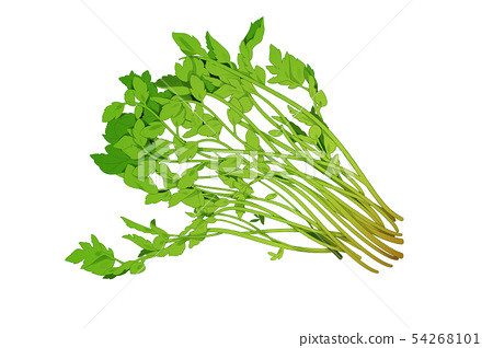 fresh herbs isolated on white background. Spring greens hand draw illustration 007 54268101