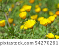 Green field with yellow spring flowers. 54270291