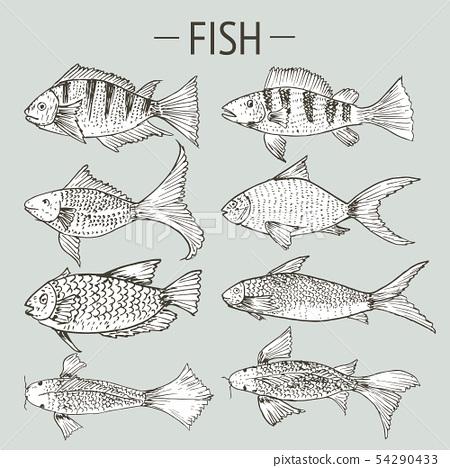 Set of hand drawn fish, Healthy food drawings set. 54290433