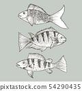 Set of hand drawn fish, Healthy food drawings set. 54290435