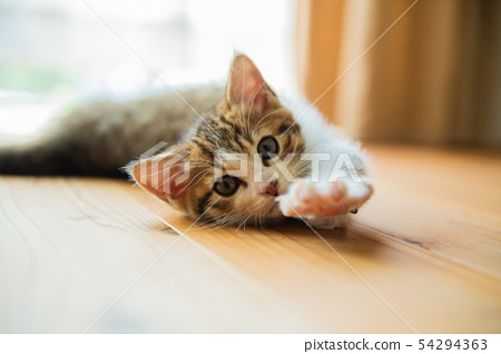 貓日 54294363