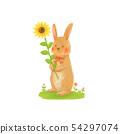 해바라기와 갈색 토끼 54297074