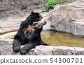 연못에 담근다 안경 곰 54300791